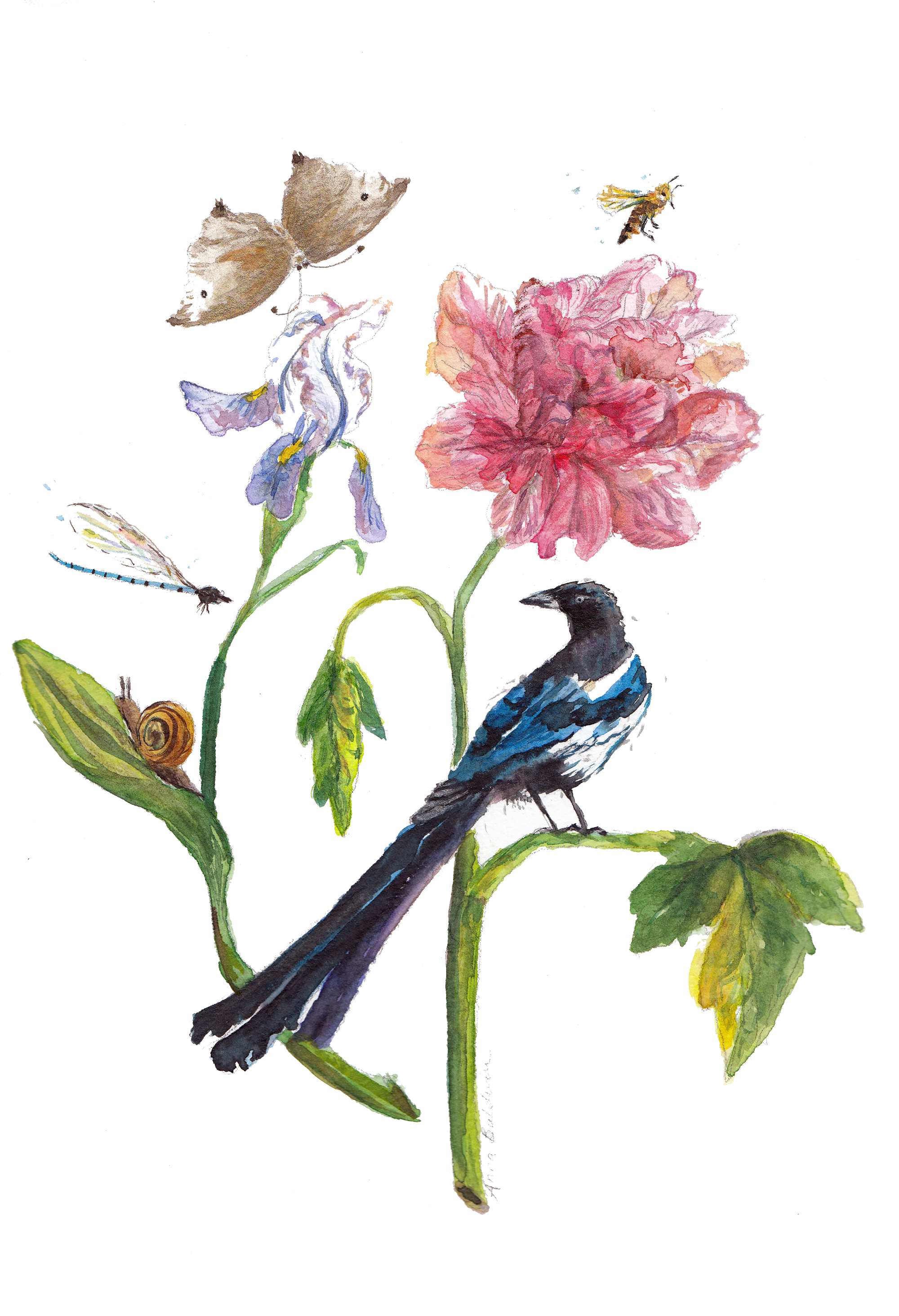 a watercolour painting of magpie and botanical plants
